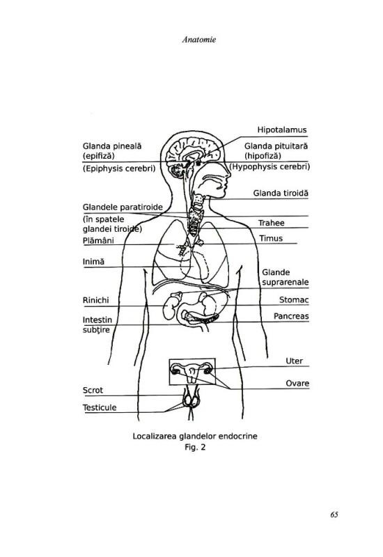 Reducere de pret Puterea de a vindeca - Ghid concis și complet al vindecării energetice
